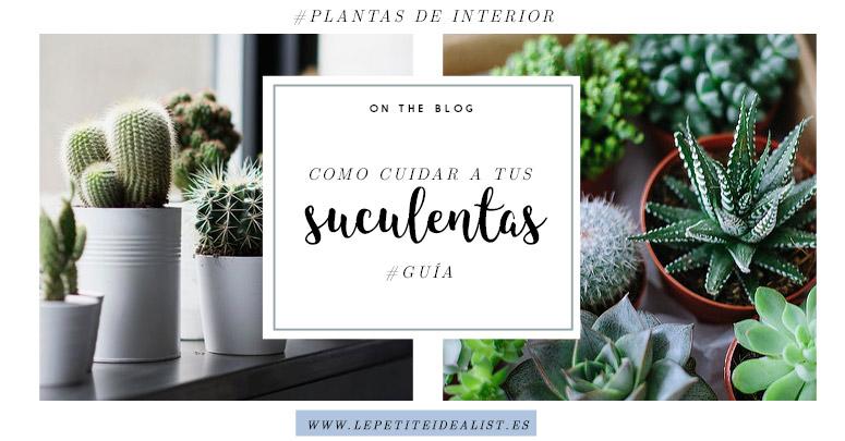 Gu a para cuidar tus cactus y suculentas le petite idealist for Cactus cuidados exterior